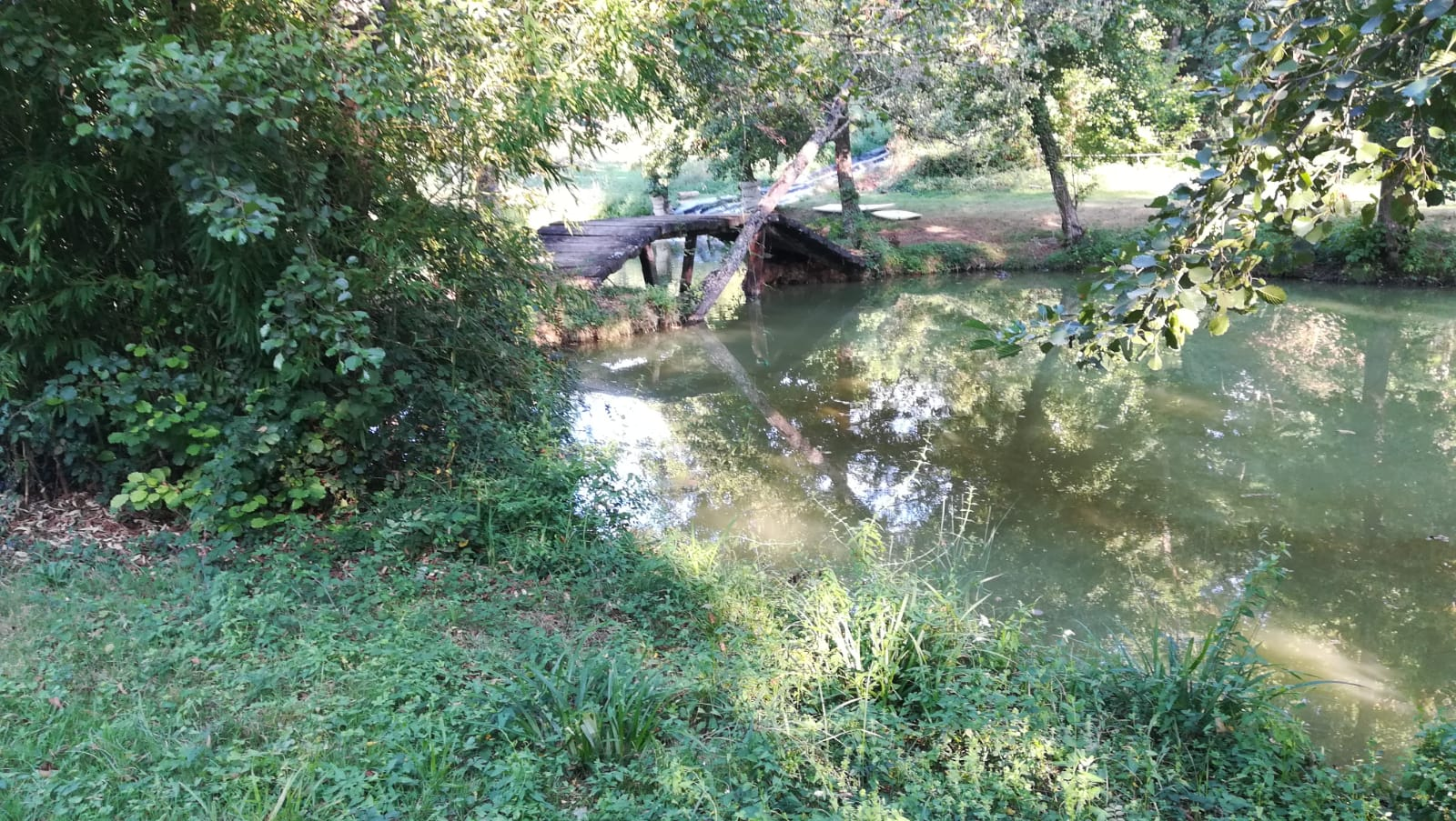 pont sur l'eau dans un bois